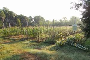 1 souryan garden