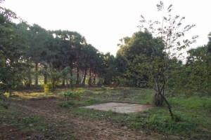 2 A pryog orchard