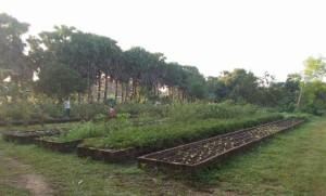 2 pryog garden