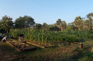 3 le jardin