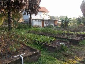 4 seed garden
